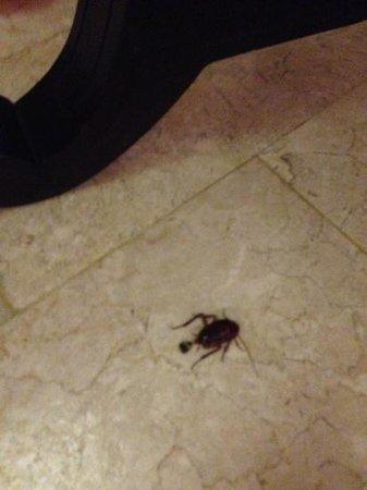 Grand Hyatt Bali: cockroach in room