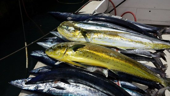 Legacy Fishing Charters : Mario and Jono really know their stuff.looked after five of us and we caught 20 in 4 hours.see p