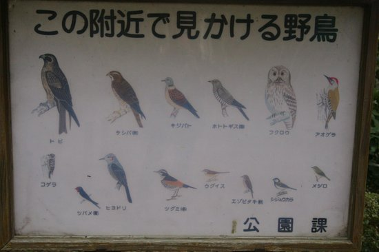 Kamakura Hiking Trails : Some of the bids you can see