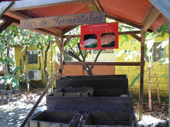 La Maison du Cacao : la torréfaction