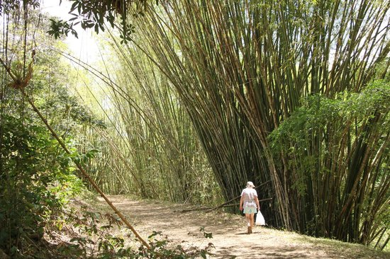Top O' Tobago Villa & Cabanas : Walking up to Highland Falls