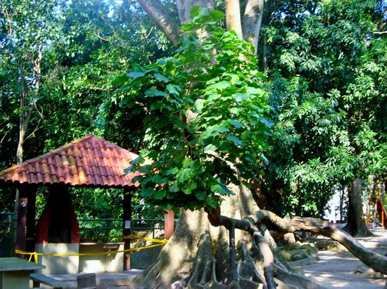 Parque Estadual Do Grajau
