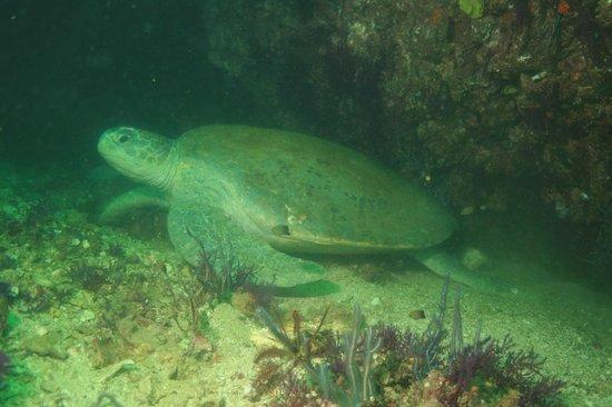 Nomad Ocean Adventures: Big turtle