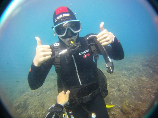 Be Free To Dive : Introduction Dive