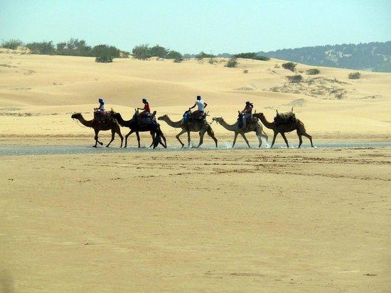 Essaouira Beach : караван с туристами)