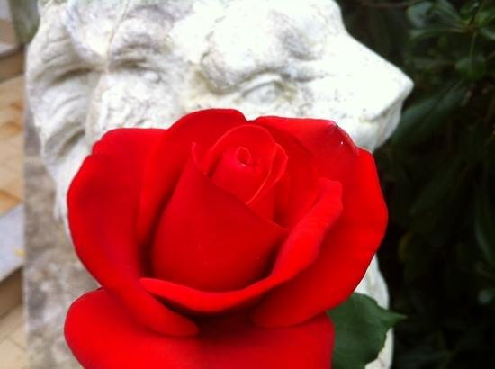 I Tre Leoni Bed U0026 Breakfast: Le Rose Piu Belle Del Tre Leoni