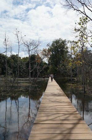 Neak Pean: The walkway through the dying forest at the Jayatataka Baray