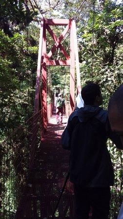 Monteverde Cloud Forest Biological Reserve: Hanging Bridge