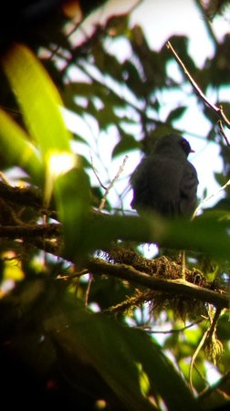 Monteverde Cloud Forest Biological Reserve: Bird through the Scope