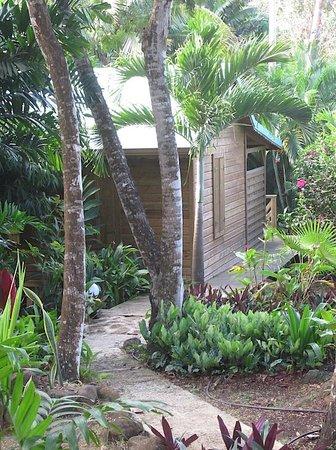Au jardin des colibris : La case creole