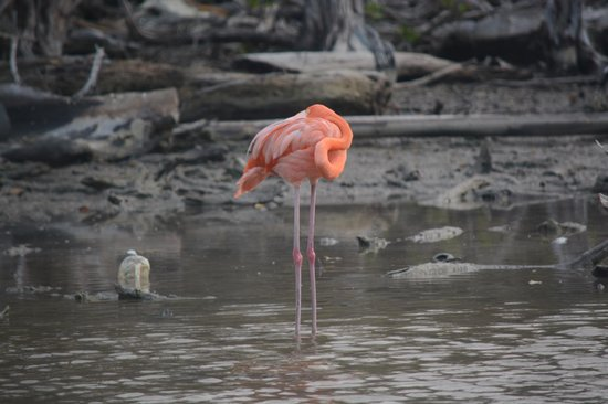 Decameron Isla Palma: Flamingo en su habitat.