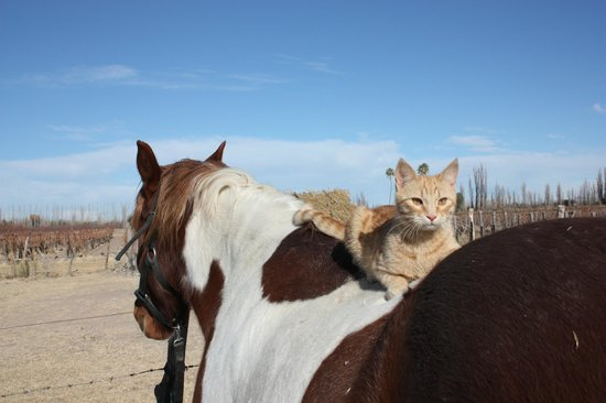 La Carmelita Hotel Rural: Las mascotas
