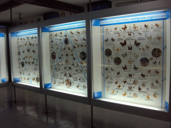 Lorenzo Scaglia Municipal Museum of Natural Sciences: Invertebrados