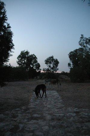 Villa Juba: les animaux en liberté dans le parc