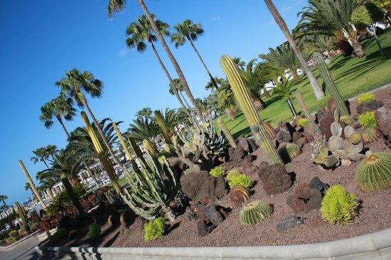 ClubHotel Riu Gran Canaria : giardini