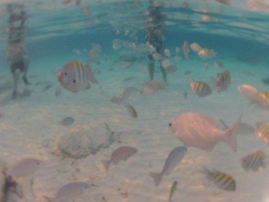 El Cozumeleno Beach Resort: Plein de poissons