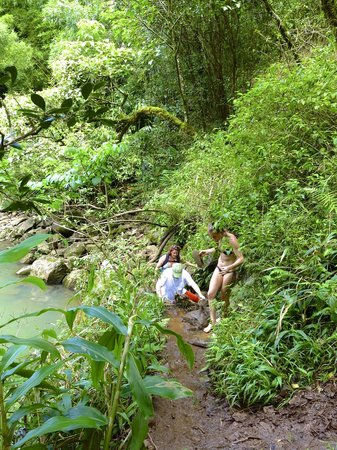 Paddle On! Maui - Private Tours: Bamboo Hike