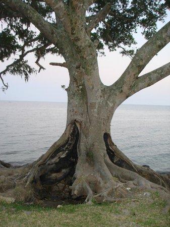 Praia dos Prazeres