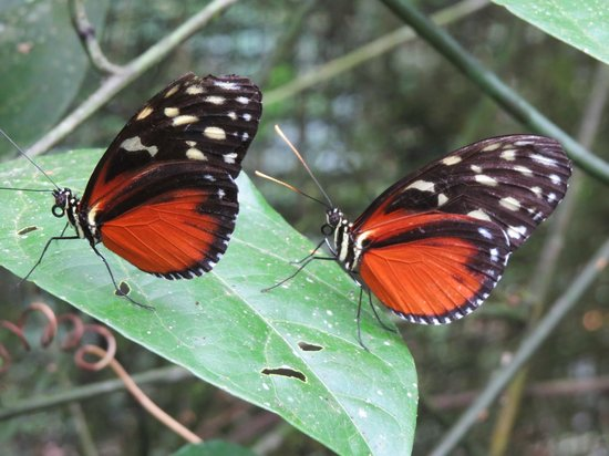Volcano Lodge & Springs: Butterflies at the butterfy sanctuary