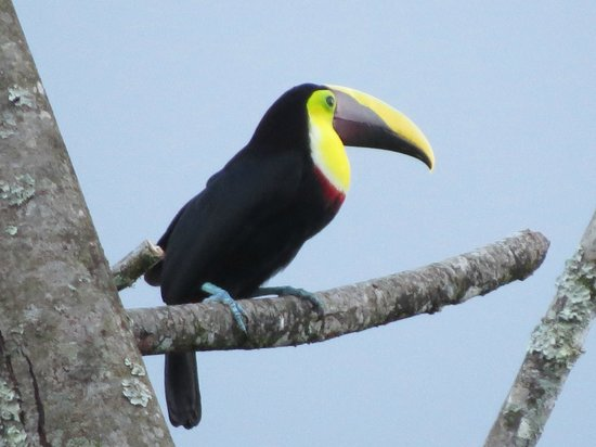 Volcano Lodge & Springs: Toucans in the evening!