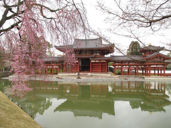 Byodoin Temple: 平等院の桜