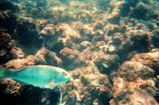 Grand Sirenis Riviera Maya Resort & Spa: under the sea