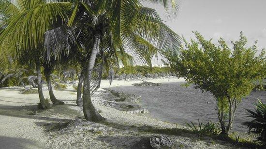 Grand Sirenis Riviera Maya Resort & Spa: ahh mexico...