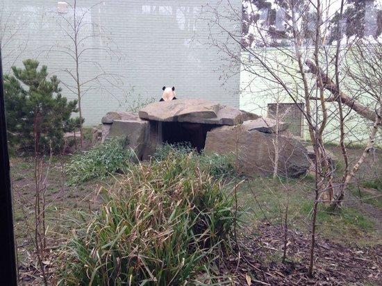 Edinburgh Zoo: Yang Guang