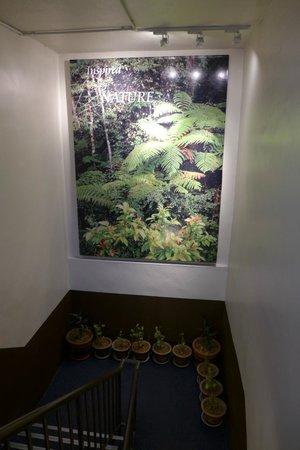 Camellia Budget Inn: hallway