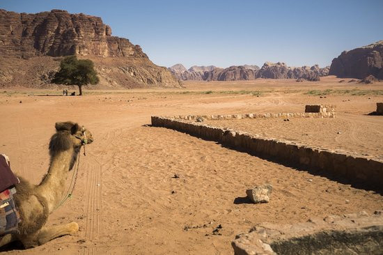 Wadi Rum Travel Camp: Water Break for the camels