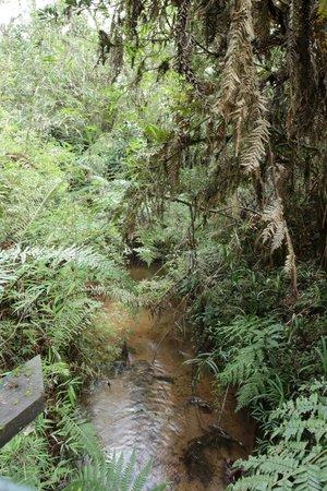 Horto Florestal: Trilha