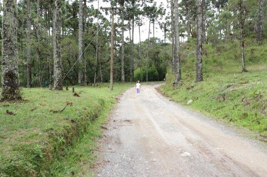 Horto Florestal: Estrada da Trilha