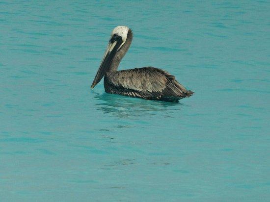 Club Med Columbus Isle: Pelican