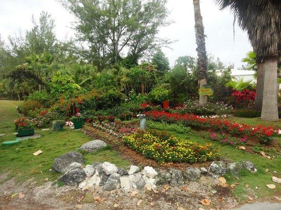 Club Med Columbus Isle: Jardins de l'hotel