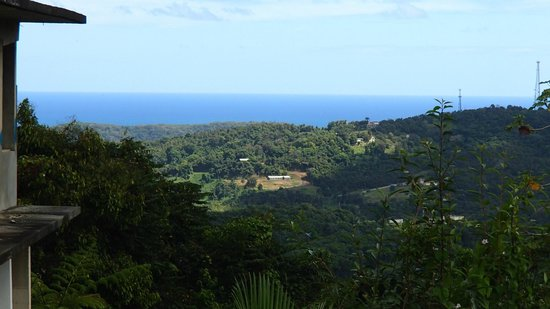 Rainforest Inn: breathtaking view from waterfall at end of Humphry's private trail