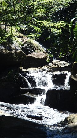 Rainforest Inn: waterfall at end of hike