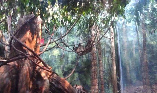 Greensboro Science Center : Sloth