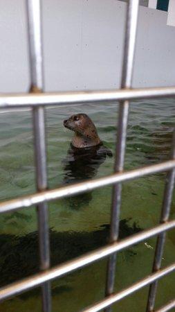 Seaside Aquarium: Cute seals