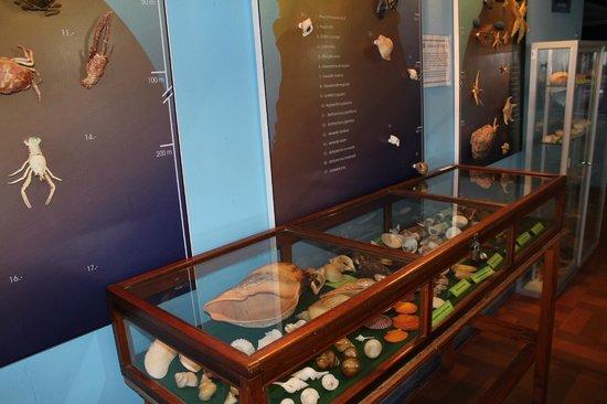 Acuario y Museo Facultad de Ciencias del Mar