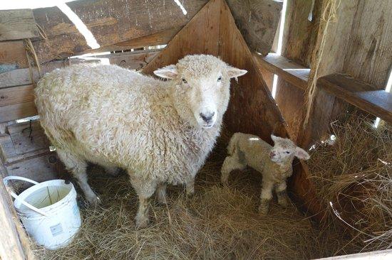 Turtleback Farm Inn: New baby!
