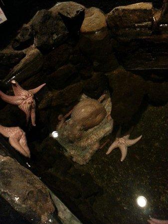Seaside Aquarium: Octopus