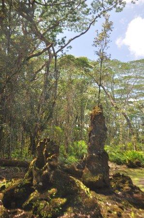 Apau Hawaii Tours: beautiful forests