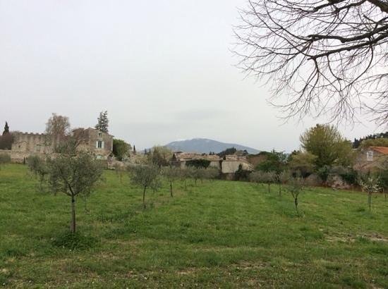 Les tilleuls d'Elisee : oliveraie
