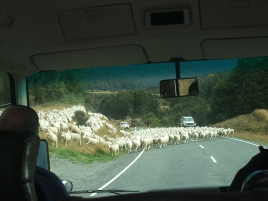 Southern Discoveries - Go Milford: New Zealand traffic jam on the road to Milford Sound