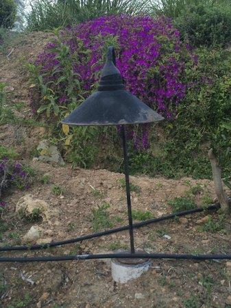 The Marmara Antalya: garden trip