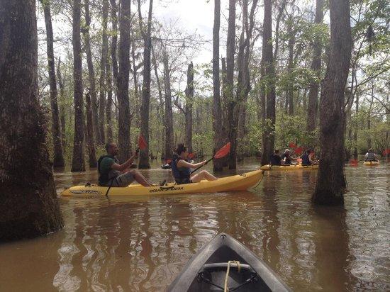 Kayak Swamp Tours: Cypress swamps, Pearl River, LA.