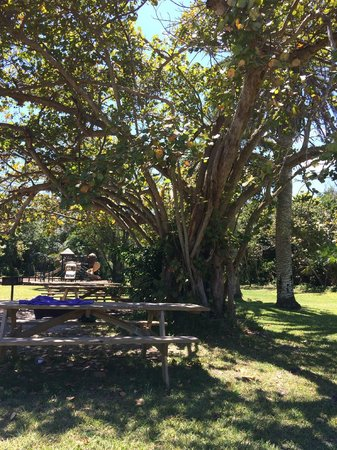 Hugh Taylor Birch State Park : one of many places to picnic in the park