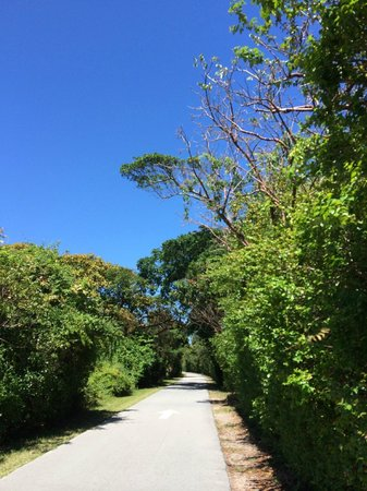 Hugh Taylor Birch State Park : walking the road path