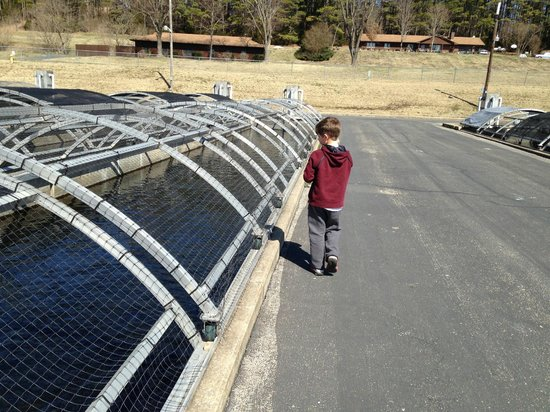 Shepherd of the Hills Fish Hatchery : Feeding row after row of fish