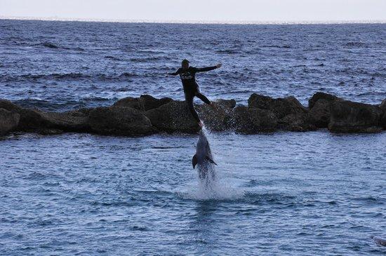 Dolphin Academy Curacao : Show dos golfinhos